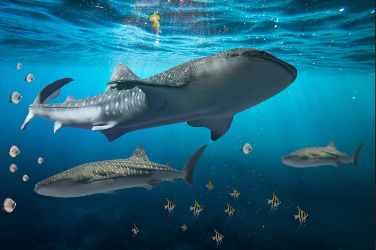 40 Sea Fish Overlays, digital Tropical ocean animals, jellyfish, whale, shark, dolphin, underwater fantasy, high-resolution realistic png